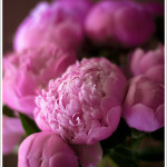 Mad About Peonies